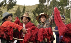 Nilda Callañaupa from CTTC raises a crimson red skein of yarn after a successful dye day in Acopia, Peru.
