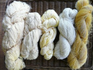 Wild silk in various forms: Reeled Bombyx mori on far right to handspun eri silk in different weights to the left.