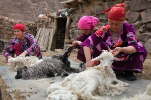 Tajik women shearing the angora goats for spinning fiber for handspun yarn.